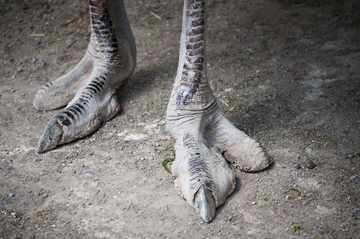part_cont_ostrich
