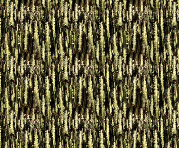 Ana Asúa. Proyecto final fotografía-Artediez-cactus